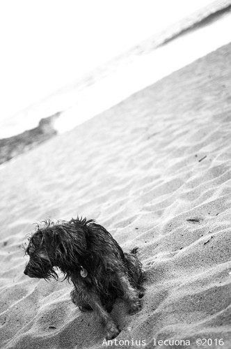 Lost Dog black and white art photography