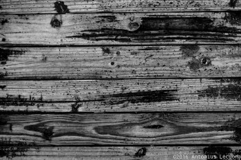 Wood black white background photography fine art